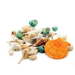 200g Nature Aquarium Fish Tank Sea Shell Beach Seashells Con